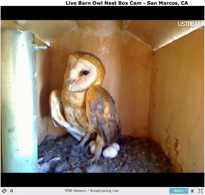 Live Owl Nest Box Cam